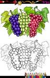 Druvafruktillustration för färgläggningbok royaltyfri illustrationer