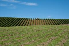 druvahorisont till vines Arkivbild