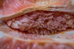 Druvan bär frukt med rosa stammar Arkivfoton
