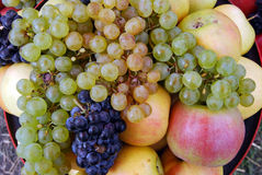 Druvan och äpplena Fotografering för Bildbyråer