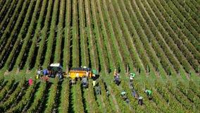 Druvaplockare som skördar druvor i Bordeaux vingårdar nära Helgon-Emilion-Gironde, Frankrike