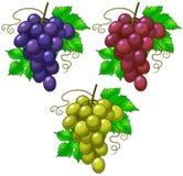 druvor vektor illustrationer