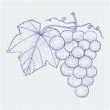 Druvor Den tecknade handen skissar Vektorillustration på anteckningsbokarkbakgrund vektor illustrationer