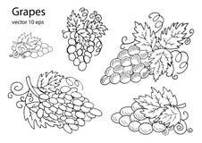 Druvor för design stock illustrationer