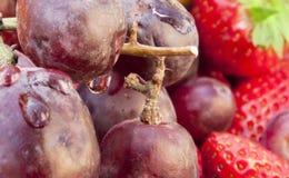 Druvor och frukt Royaltyfri Bild
