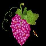 Druvor på en vinranka och en nyckelpiga vektor illustrationer