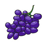 Druvor räcker den utdragna frukter isolerade vektorn Arkivbild