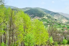 Drvengrad Σερβία στοκ εικόνα