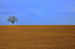 DRY. Landscape with only one tree Royalty Free Stock Photos