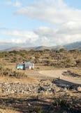 Dry acacias in the serengeti Royalty Free Stock Photos
