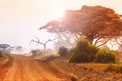 Dry African landscape with dirt road at sunset Stock Photo