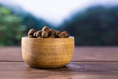 Dry allspice berries asia jungle. Lot of whole dry brown allspice berries with wooden bowl asian jungle in background stock photos