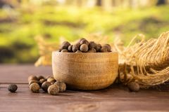 Dry allspice berries with forest behind. Lot of whole dry brown allspice berries with wooden bowl on jute cloth with forest in background royalty free stock photo