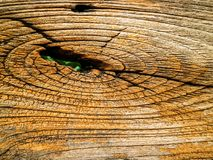 Dry ancient of outdoor wooden surface has damage and line by tem. Dry ancient of outdoor wooden surface has detail of damage and line by tempurature Stock Images