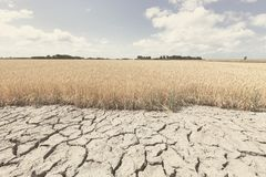 Free Dry And Arid Land With Failed Crops Due To Climate Change And Global Warming Royalty Free Stock Photography - 152851347