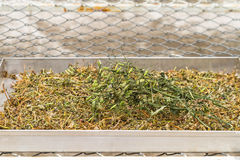 Dry of Andrographis paniculata plant on Stainless steel tray use Royalty Free Stock Image