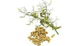 Dry of Andrographis paniculata plant and yellow drug pill on whi Royalty Free Stock Images