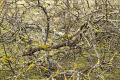 Dry apple branches. Felled apple tree branches in spring Royalty Free Stock Images