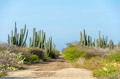 Dry and arid desert landscape in Aruba Royalty Free Stock Photo