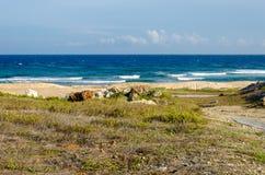 Dry and arid desert landscape in Aruba Stock Images