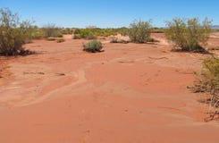 Dry arid red sand desert. On flat plain Royalty Free Stock Images