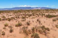Dry arid red sand desert. On flat plain Stock Photography