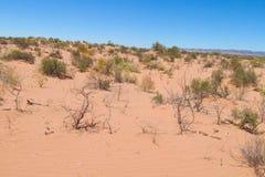 Dry arid red sand desert. On flat plain Royalty Free Stock Photo
