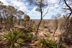 Dry Australian bush under a blue sky with white clouds royalty free stock images