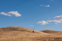 Dry australian farm grass landscape. With blue sky and clouds Royalty Free Stock Images