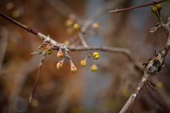Dry autumn branch with some buds on it, fall or winter time, close up, natural colors.  stock image