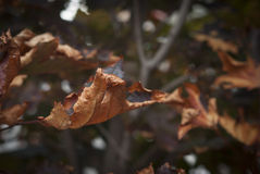 Dry Autumn Fall Leaves Stock Photos