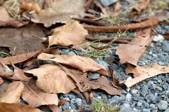 Dry autumn fallen leaves. stock photo