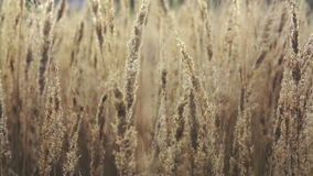 Dry autumn grass stock video