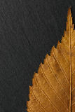 Dry autumn leaf on  background texture of black stone. Royalty Free Stock Photo