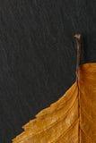 Dry autumn leaf on background texture of black stone. Stock Photos