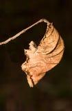 Dry Autumn leaf Stock Image