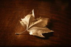 Dry autumn leaf isolated stock photography