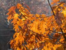 Dry autumn leaf stuck Royalty Free Stock Photos