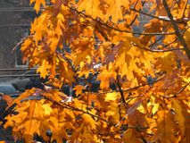 Dry autumn leaf stuck - beautiful background Stock Photos