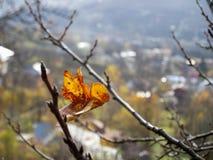 Dry autumn leaf stuck Royalty Free Stock Image