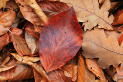 Dry autumn leafage. Abstract natural background Stock Photo