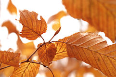 Dry autumn leafs. Detail from the autumn forest Stock Photo