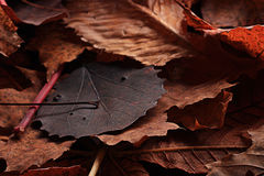Dry autumn leaves  close up Stock Photography
