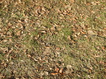 Dry  autumn leaves fallen on the grass Royalty Free Stock Image