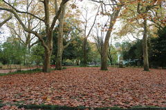 Dry autumn leaves. Field full of dried autumn leaves in a city park of Caldas da Rainha - Portugal Stock Photography