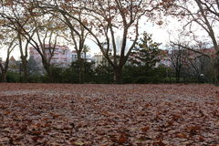 Dry autumn leaves. Field full of dried autumn leaves in a city park of Caldas da Rainha - Portugal Stock Images