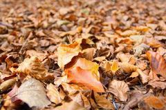 Dry autumn leaves on the ground Stock Photos