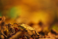 Dry autumn leaves on ground, defocused fall season background Stock Photography