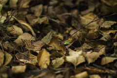 Dry autumn leaves on the ground on forest path Stock Photo