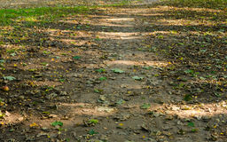 Dry autumn leaves on the ground Stock Photography